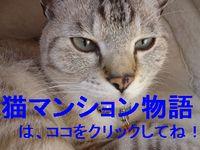 猫マンション.jpg